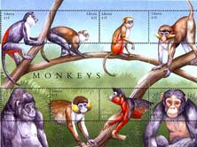 eight monkeys